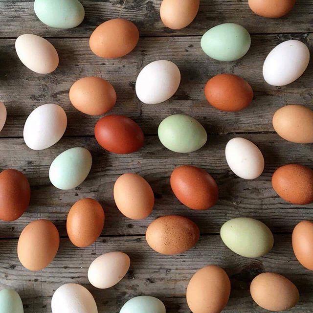 Find disse smukke og helt enormt velsmagende æg lagt af forskellige racehøns hos @slagterenvedkultorvet 😍