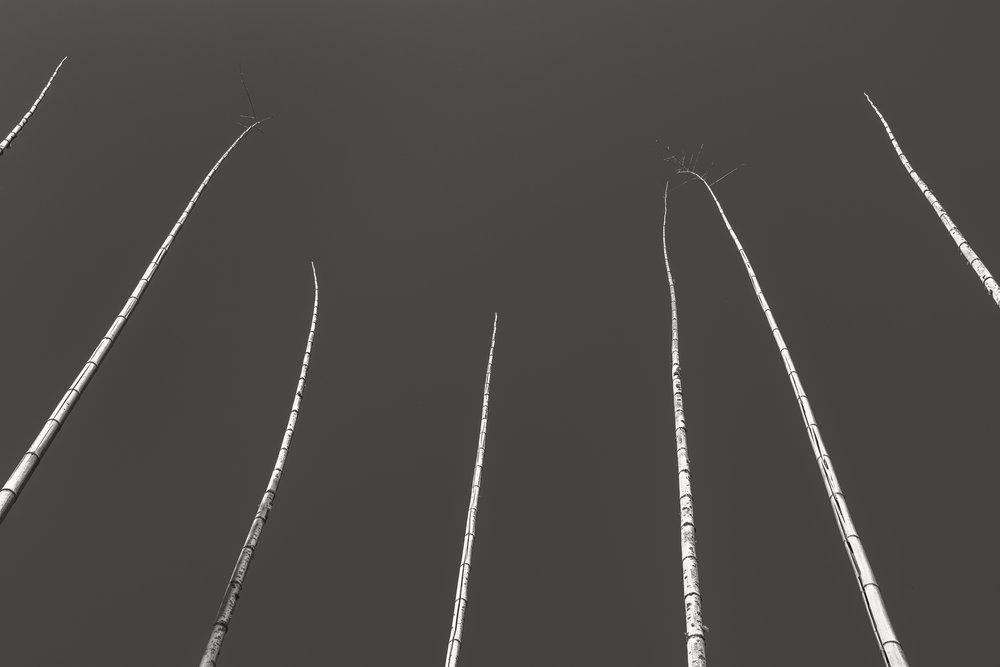 bamboo poles.jpg