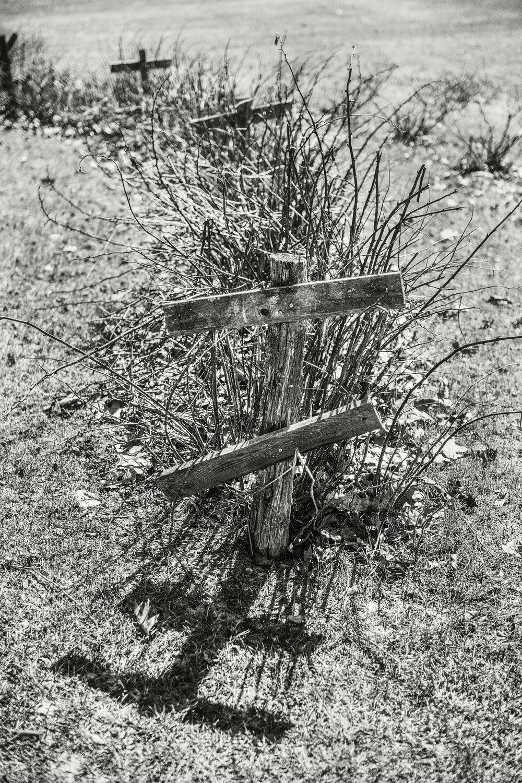 sculpture garden 001.jpg