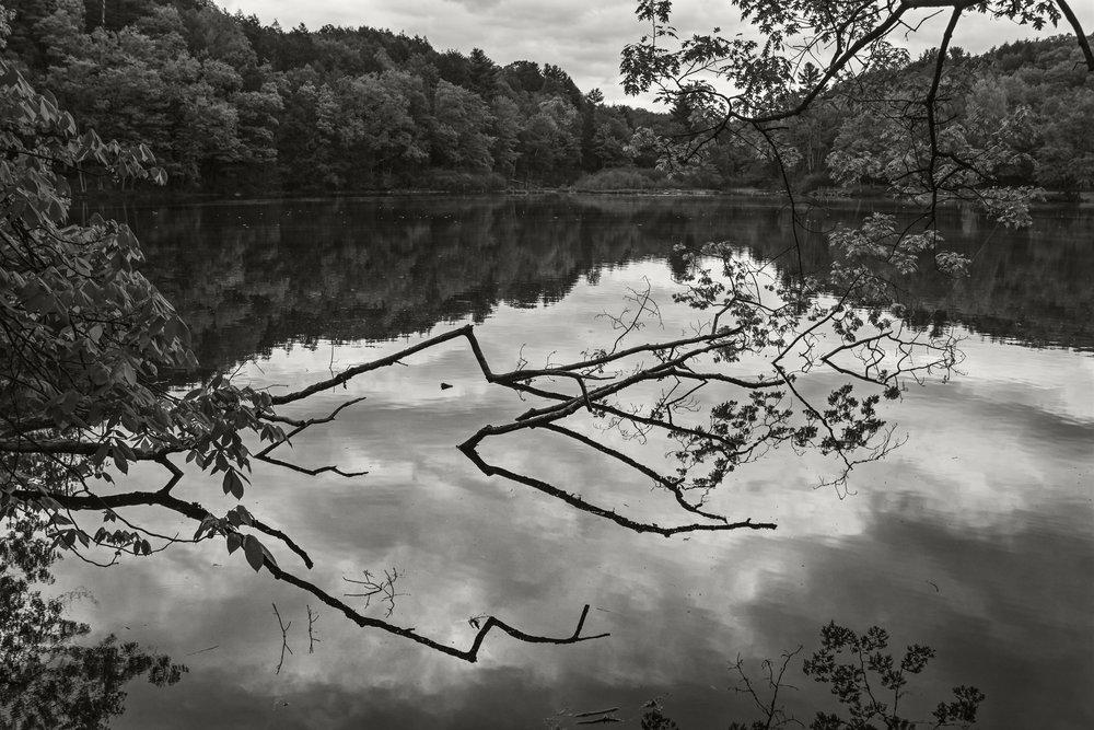 puffers pond 01.jpg