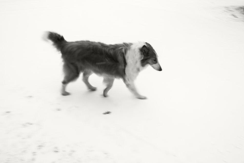 sophie-snow_24067994522_o.jpg