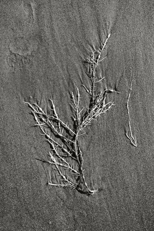 Sand Dollar Beach 02.jpg