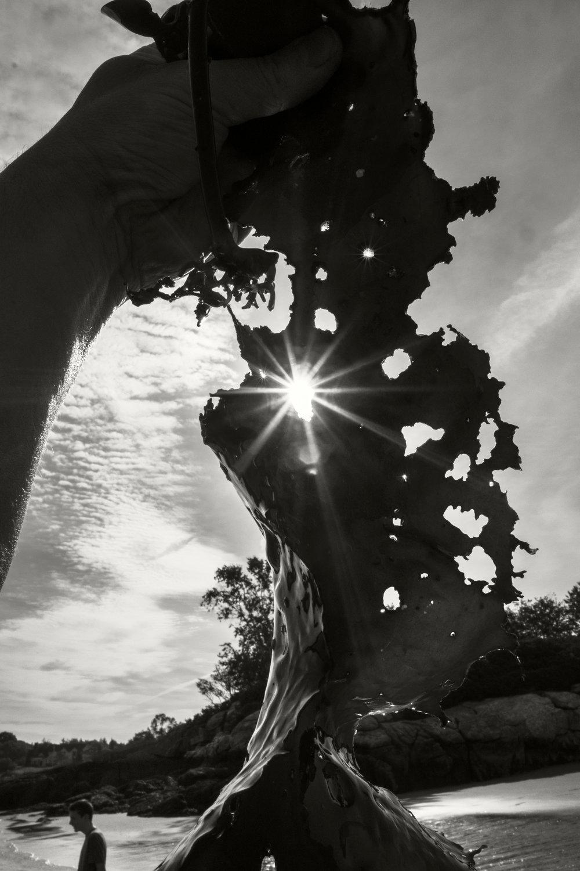 Sun Kelp.jpg