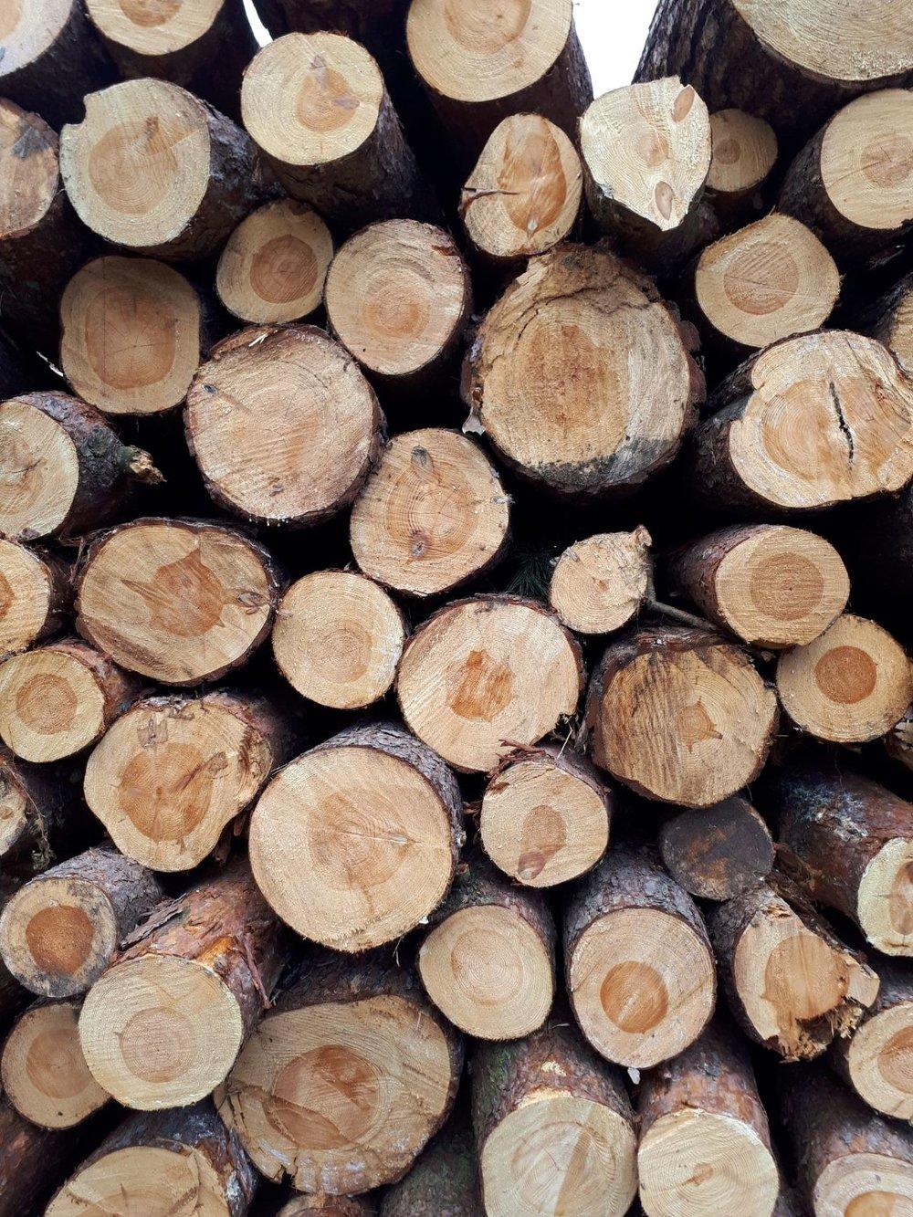 Bosbouw -