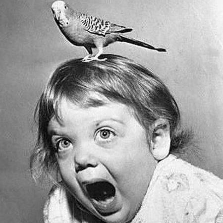 Bird-on-Head.jpg