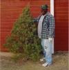 2010 Christmas tree.jpg