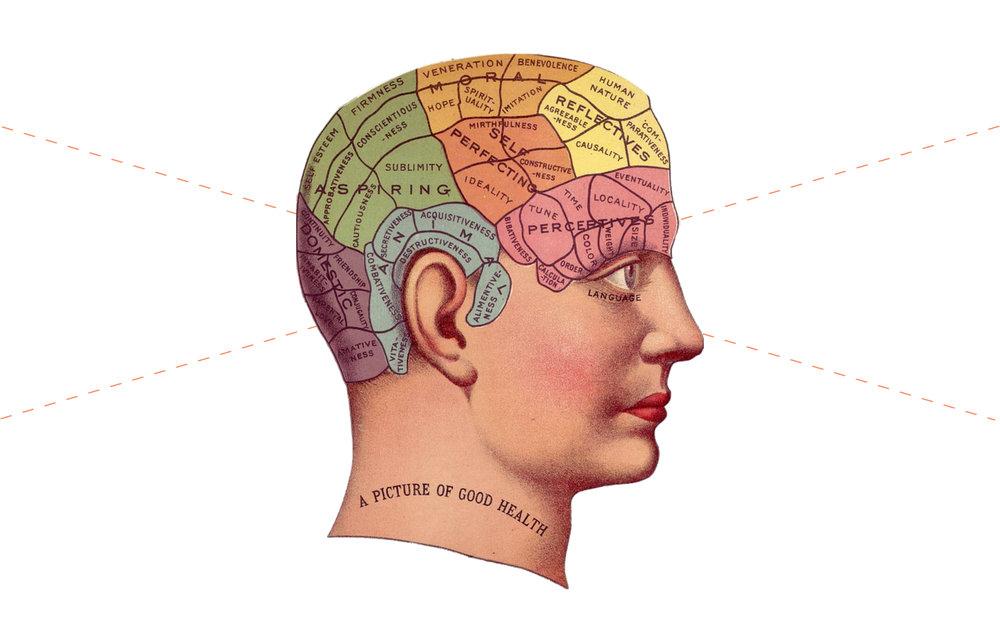 14 Tour of Human Brains.jpg