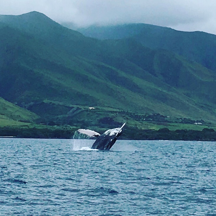 Whale watching tour!