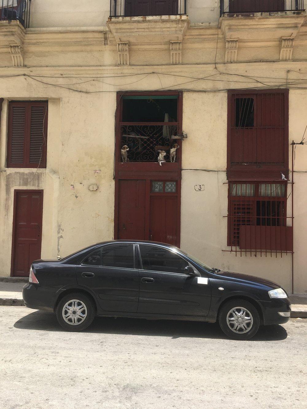 Doggies in a window