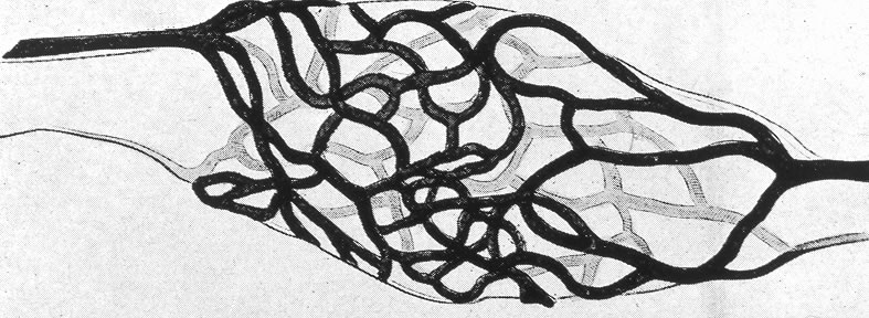 Schematic of circulatory rete surrounding a mature nurse cell. India ink preparation of Pagenstecher, 1865.