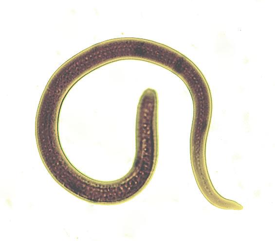 L4 female