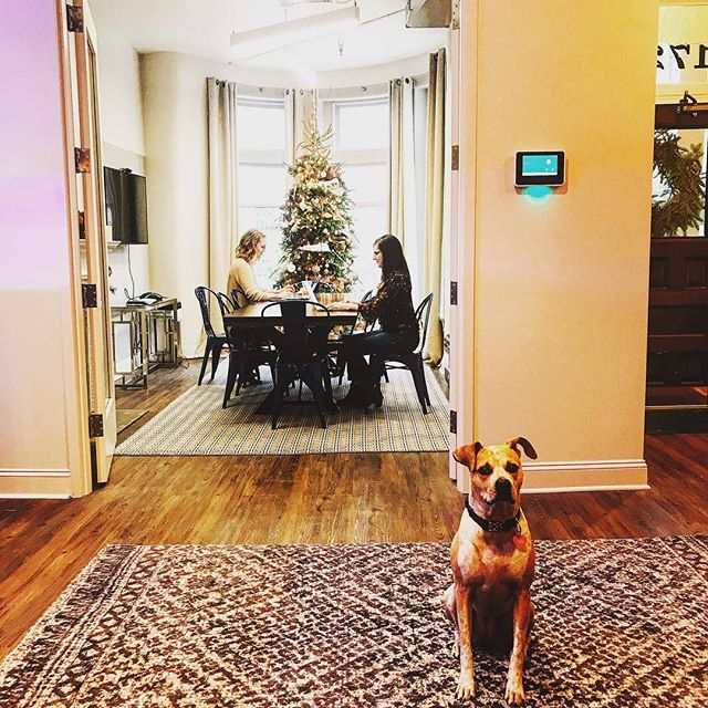 Where are you Christmas? #happyholidays #eventplanner  #holidaydecor #dogsofinstagram #tgif