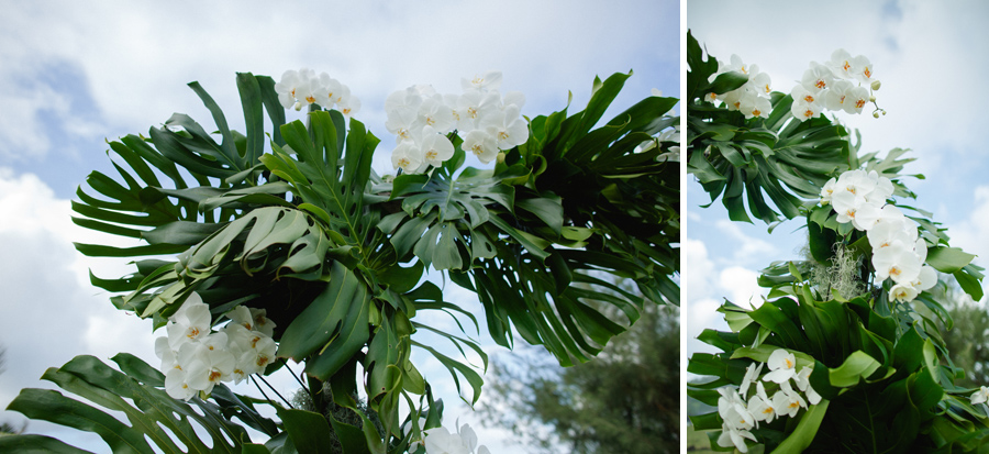 monstera and orchids