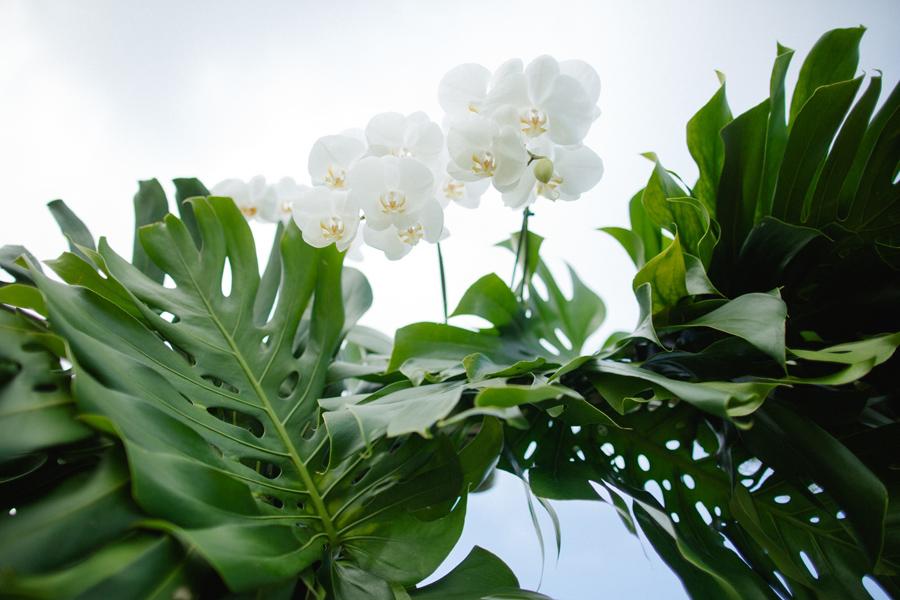 maui orchid