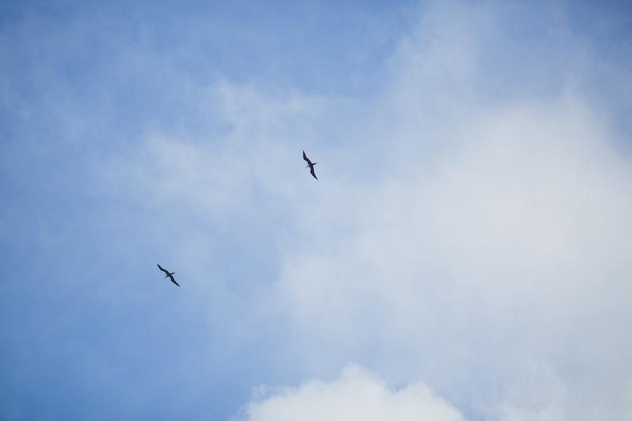 hana frigate bird