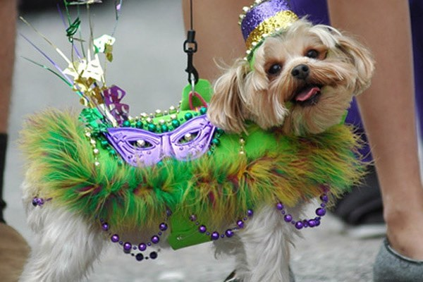 Happy Fat Tuesday 👑  Sometimes you just have to paws and enjoy the moment!