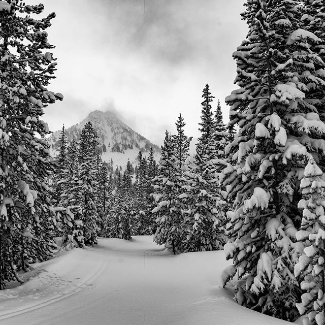 How about a black and white photo of some snow covered trees with Gunsite Mountain in the distance to make your morning better. #snow #pow #protectourwinters #mountains #winter