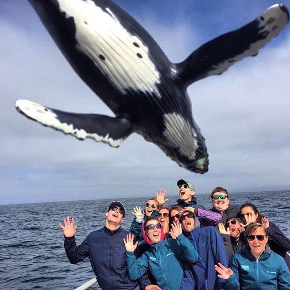 whales 5.jpg