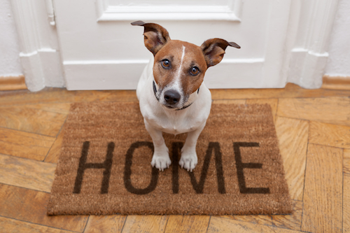 Customize-Your-Home-For-Your-Pet-Too, New Tradition Realty, Real Estate, Selling a Home, Buying a Home, Realty Southwest Washington, Vancouver WA Real Estate