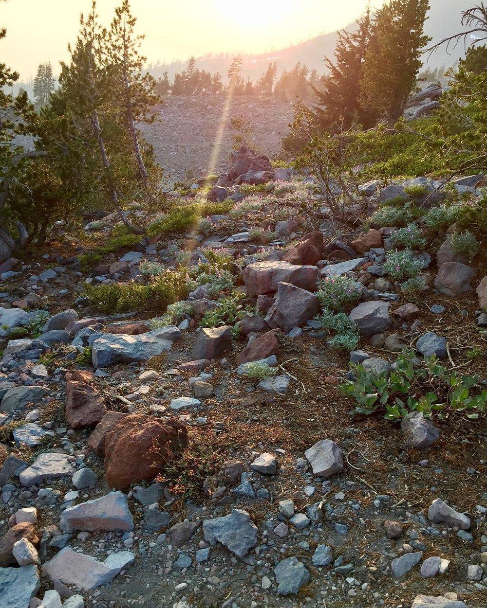 Mount Shasta Vortex Tours