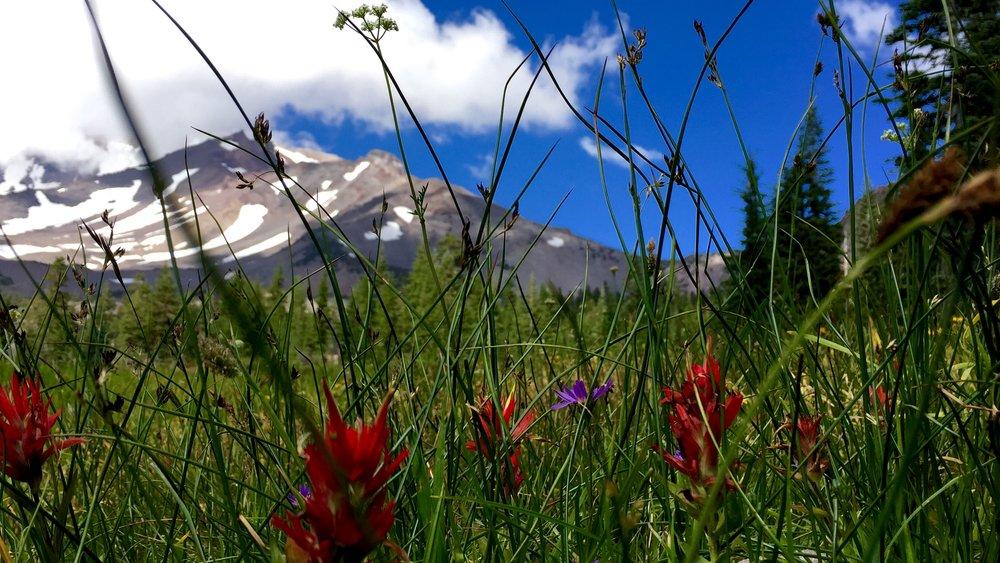 Mt. Shasta Spiritual Tours Meadow