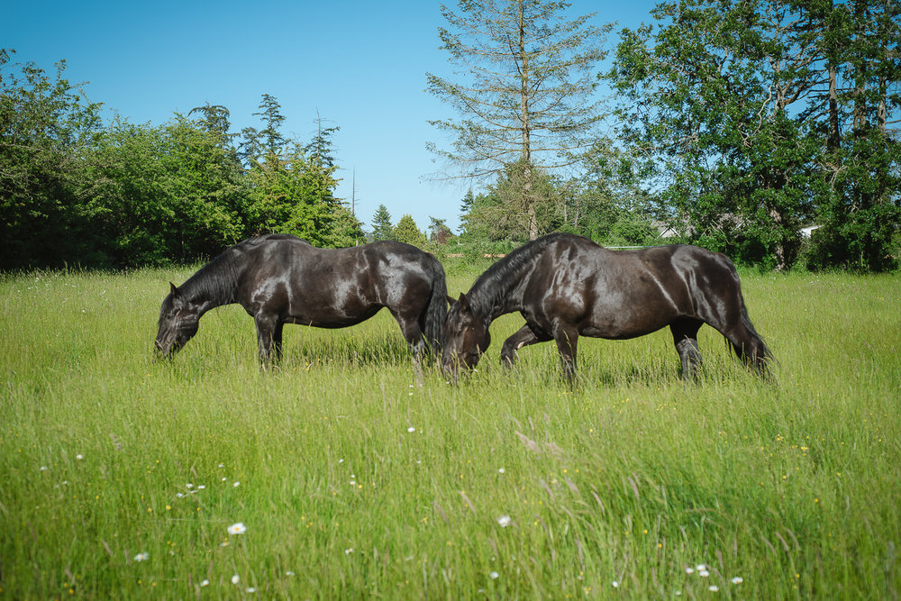Horses raising your true potential    Private   Group   Corporate