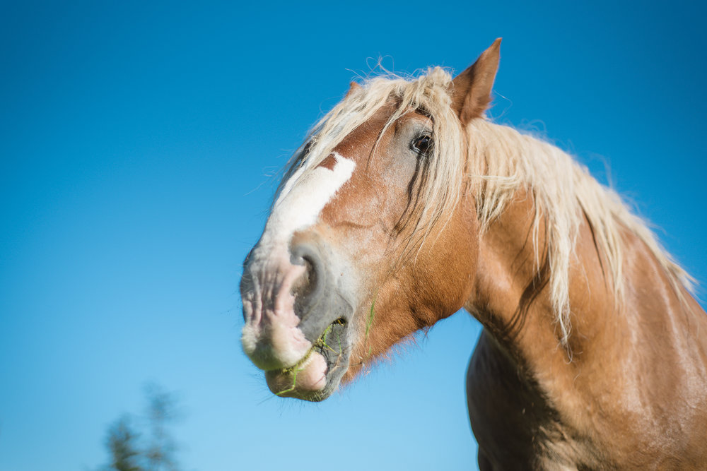 horse-wisdom-farm-31.jpg