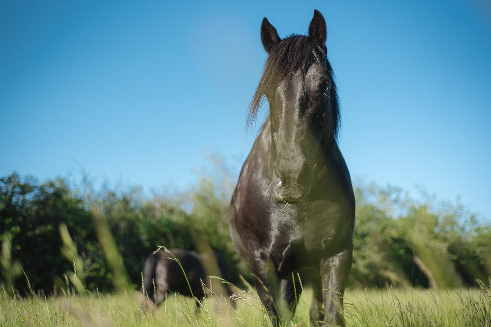 horse-wisdom-farm-37.jpg