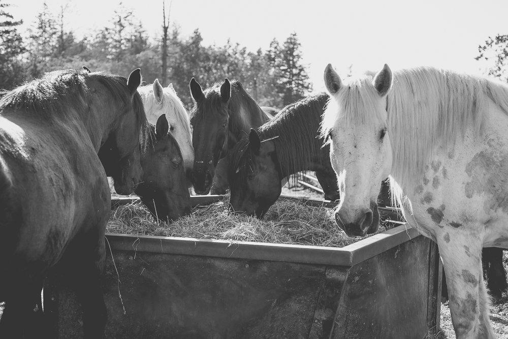 horse-wisdom-farm-5.jpg