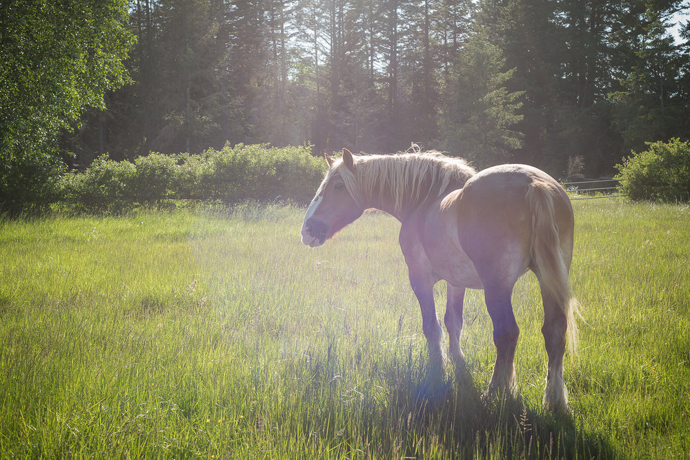 horse-wisdom-farm-16.jpg