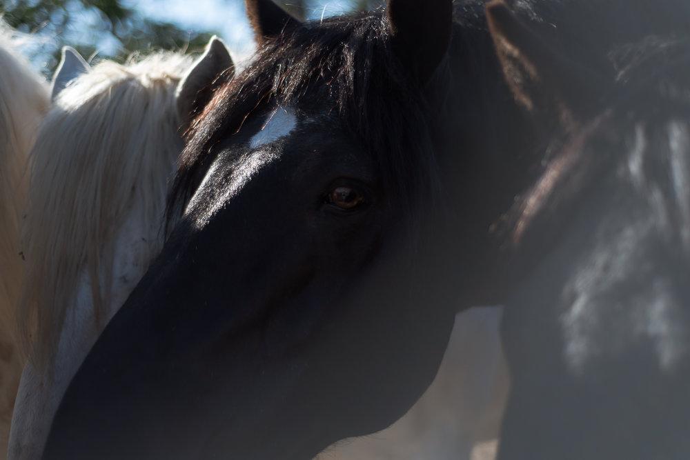 horse-wisdom-farm-40.jpg