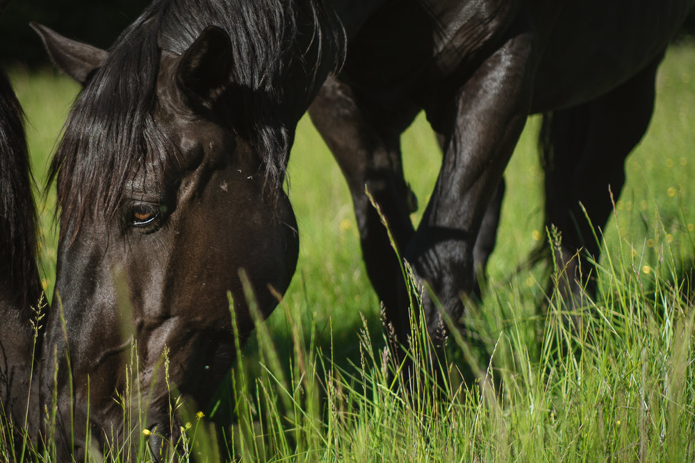 horse-wisdom-farm-64.jpg