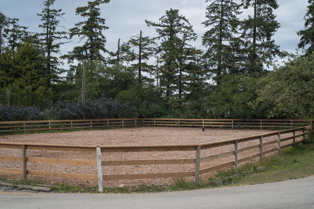 horse-wisdom-farm-50.jpg