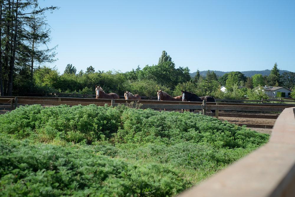horse-wisdom-farm-8.jpg