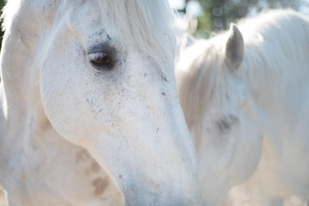 horse-wisdom-farm-41.jpg