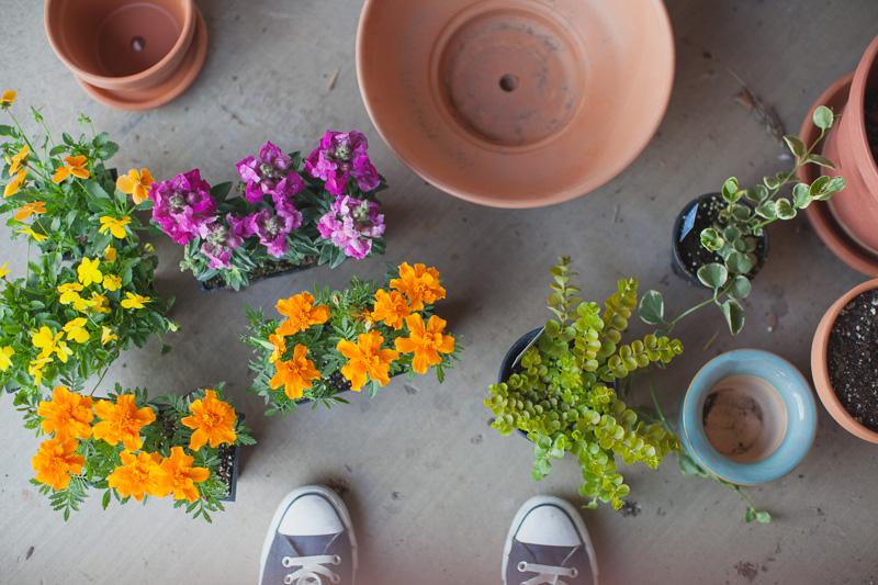 HAILEYKING PHOTOGRAPHY | patio flowers | lifestyle photography