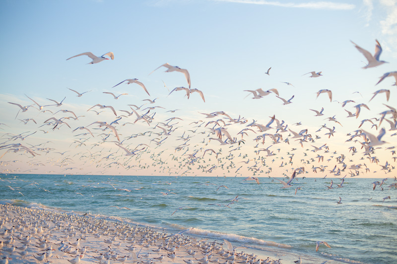 HAILEYKING PHOTOGRAPHY  | A day at the beach: Florida lifestyle photos by Hailey King Photography
