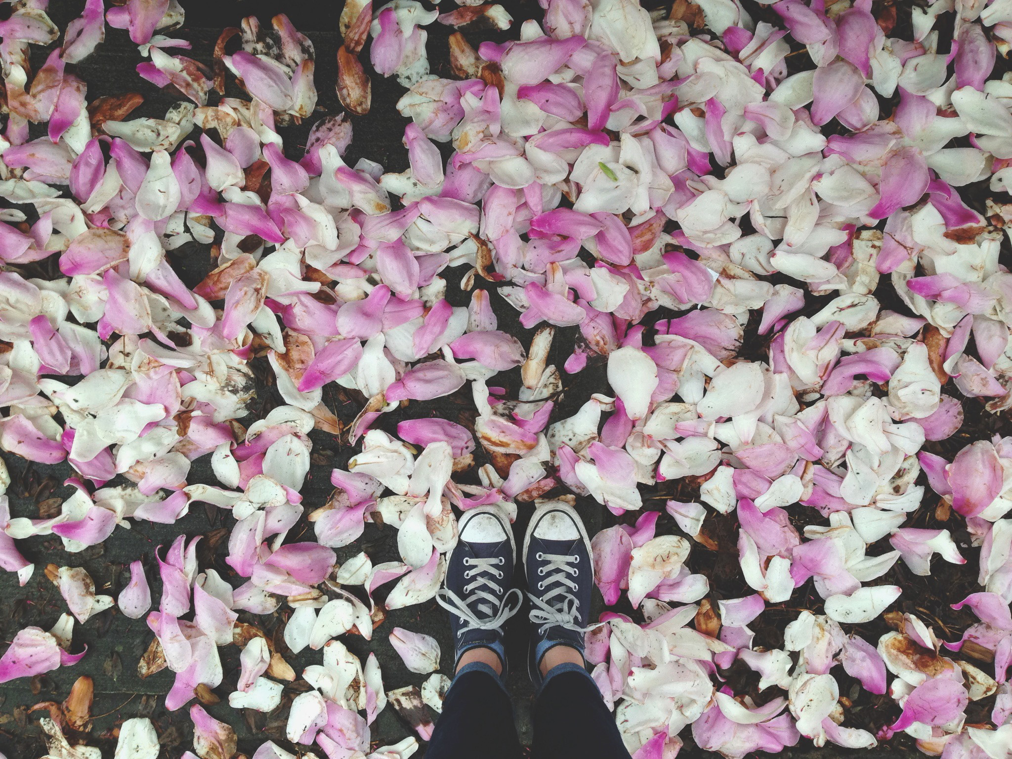 Spring Petals on instagram | Portland, Oregon Wedding, Food, and Lifestyle photographer