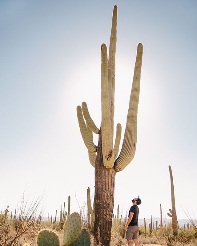 The snow in Portland has been fun and all, but I think I'm ready to be back in AZ again. ☀️ (This cactus is too big for Instagram. I had to choose between the cactus getting cropped, or Scott's feet. Sorry Scott!)