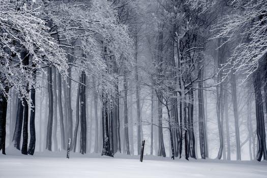 Winter photo.jpeg