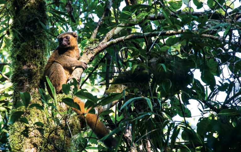 lemur-madagascar-tyson-jopson.png