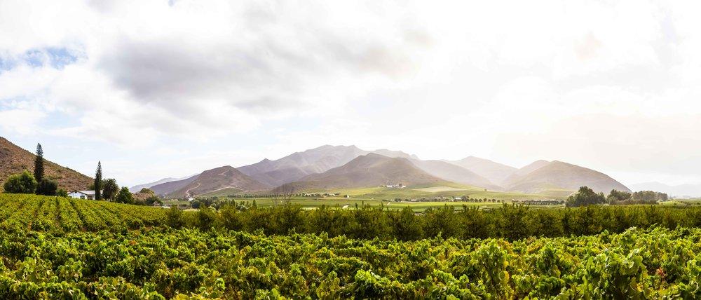 robertson-cape-winelands-tyson-jopson-1.jpg