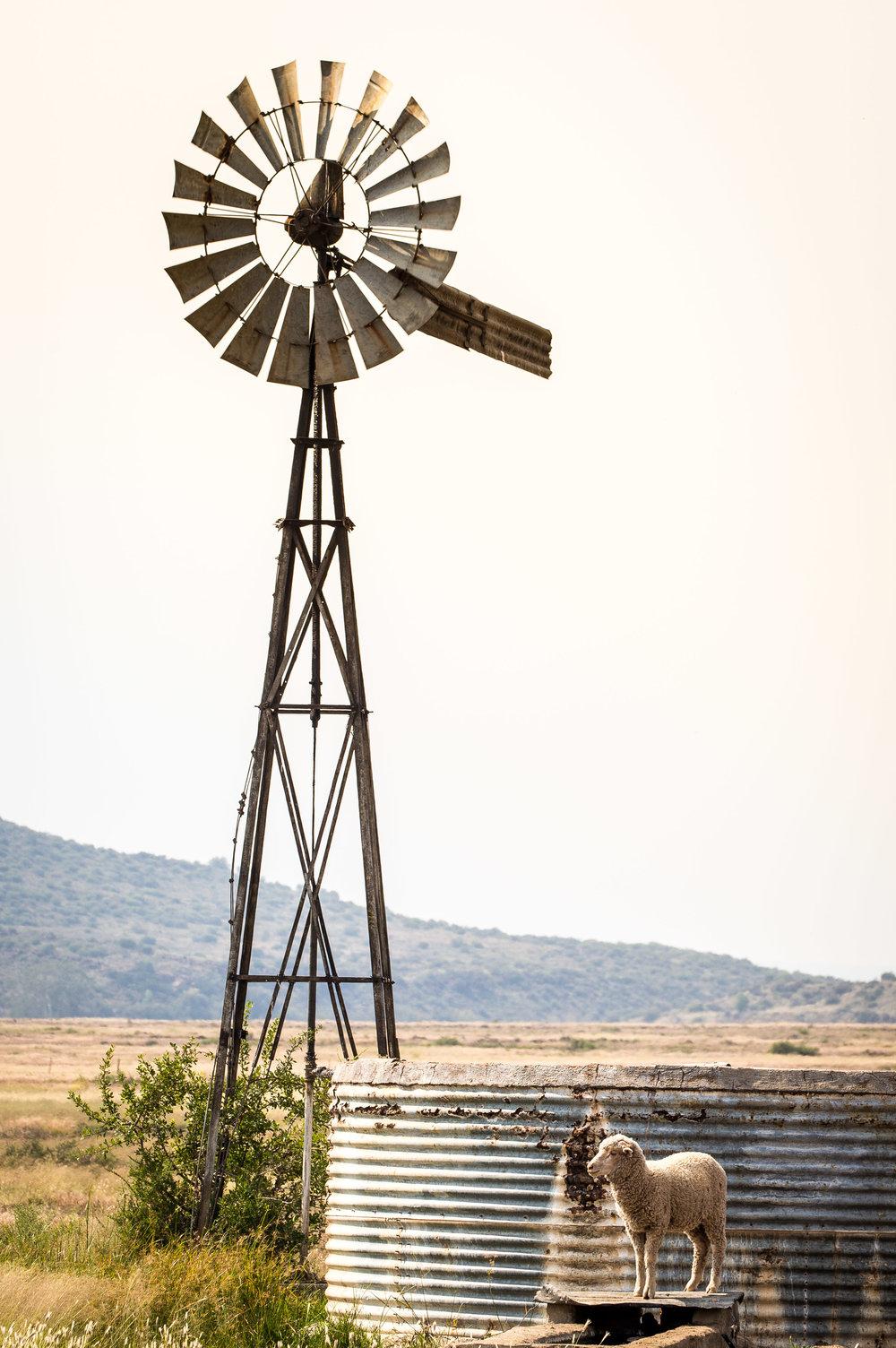 windmill-free-state-1.jpg