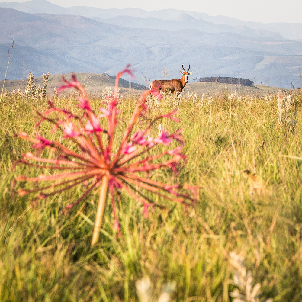 swaziland-tyson-jopson-12.jpg