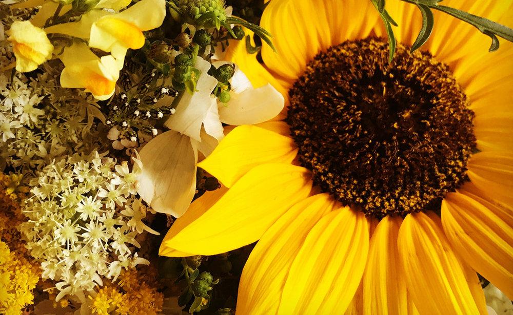 Colour flowers.jpg