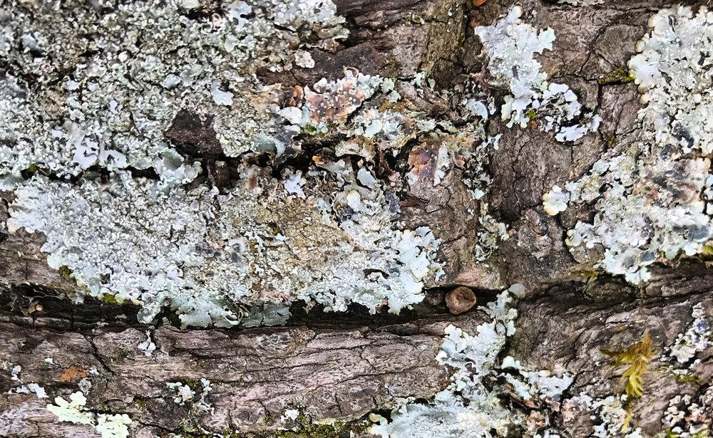 Colour lichen 1.jpg
