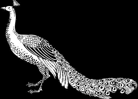 Long-Tails sind der neue Star am SEO-Firmament