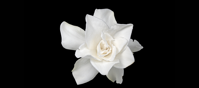 Click here - Gardenia Package Details