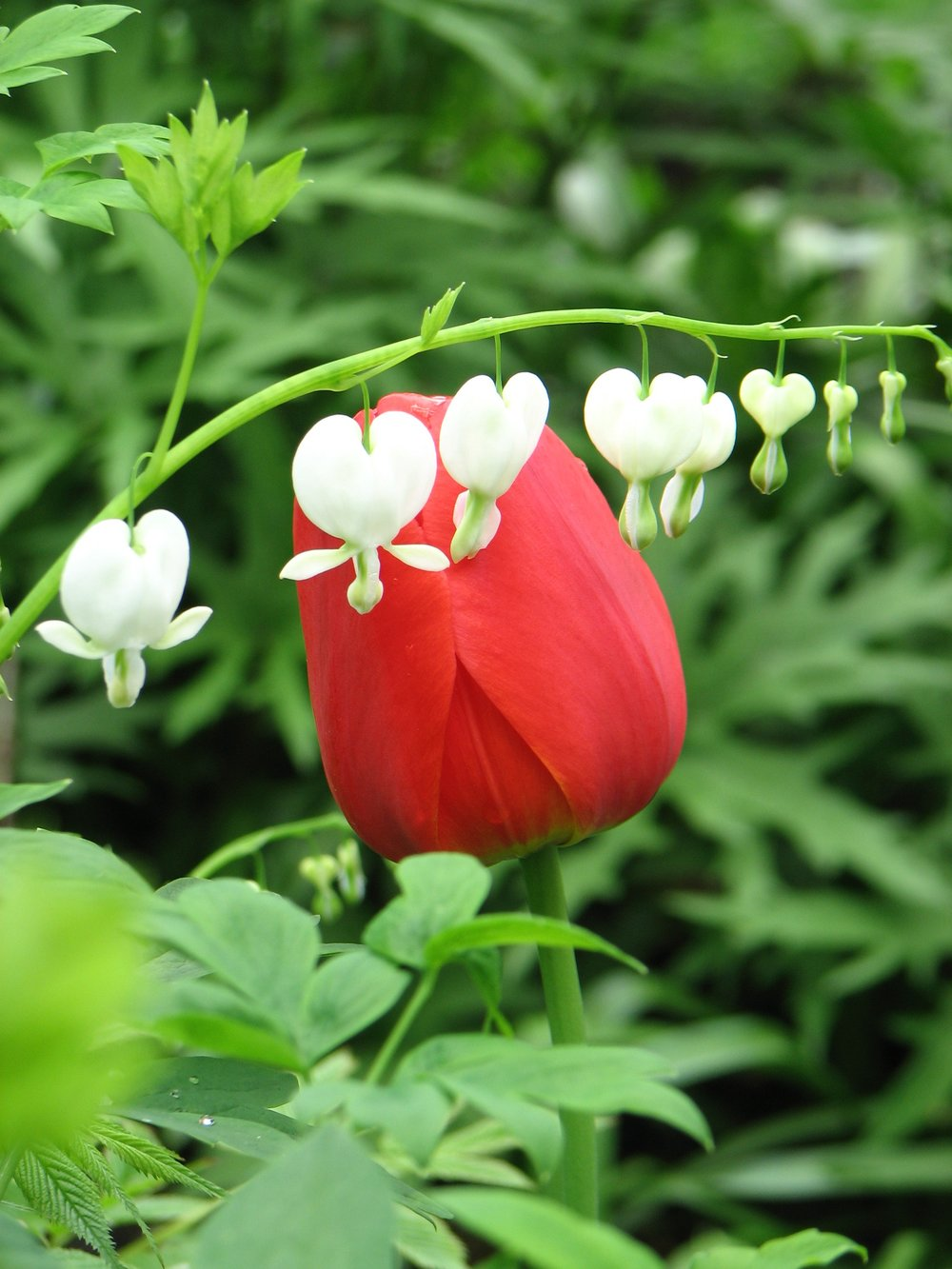 Spring Heart 3.jpg