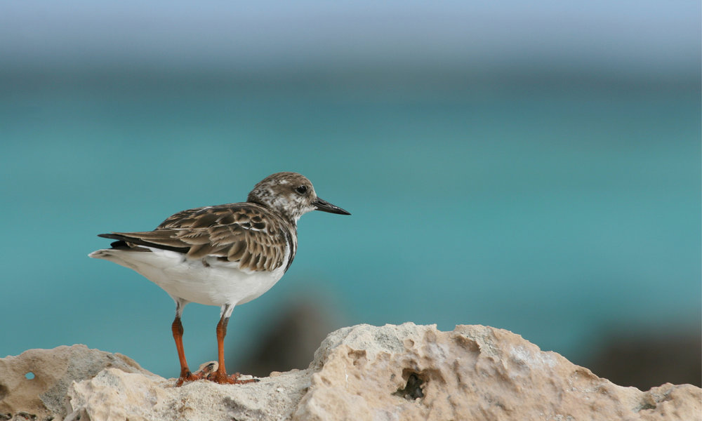 charter-yacht-sweet-escape-southern-bahamas-sponge-dive-coral-cat-island-birds-turns